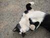 Monasty_cat2