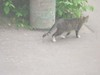 Cat_near_my_home