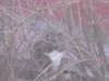 Bush_cat2