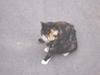 Cat1707011