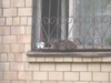Cat_near_window