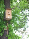 Nestling_box02
