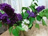 Lilac021_2
