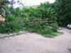 Falling_trees011