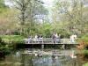 Jap_garden_spring