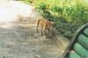 Monastery_cat