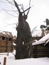 Set_tree